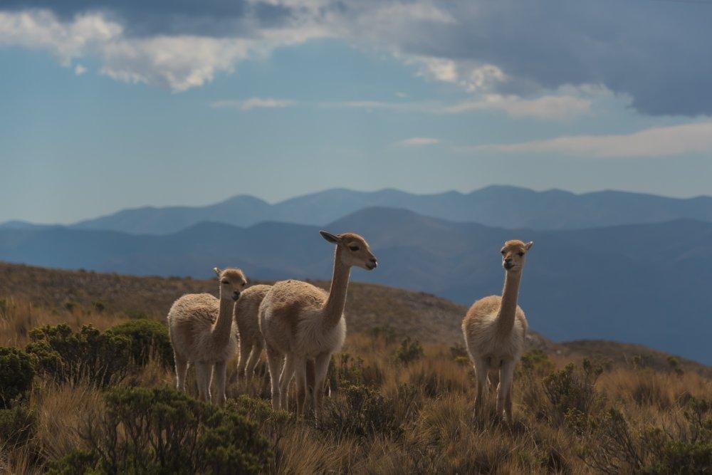 Argentina – ugningojo tango ir ledynų žemė, aplankant gražiausius pasaulyje Igvasu krioklius ir Ugnies žemę 15d.