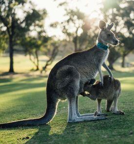 Australija - Tasmanijos sala. Kruizas po Didįjį barjerinį rifą 17d. (21d.)