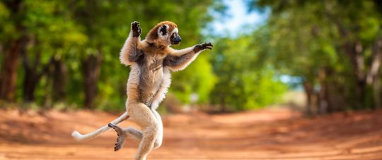 Egzotiškasis Madagaskaras su tiesioginiu skrydžiu iš Varšuvos!