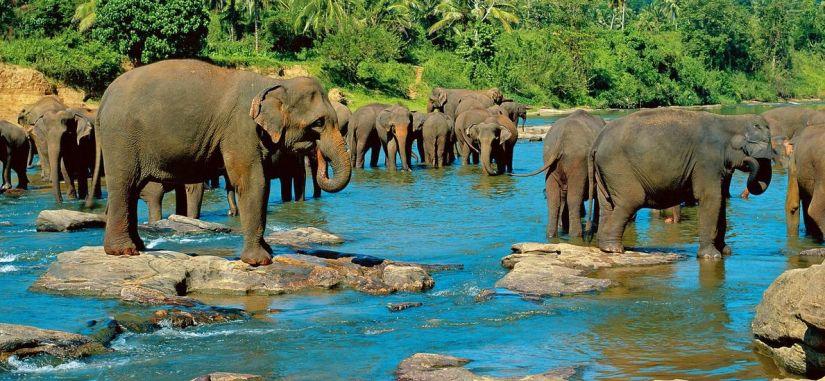 Arbata su tigrais Ceilone - nuostabi pažintinė kelionė po Šri Lanką! 11 n.