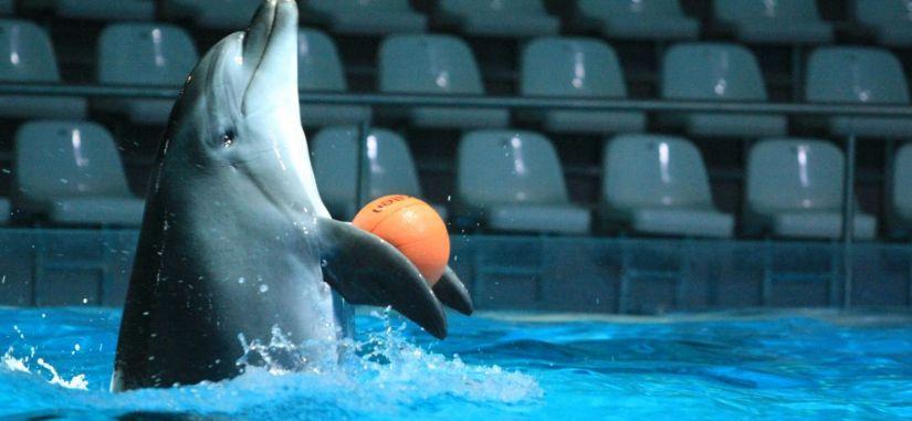 1 dienos kelionė į Klaipėdą pas delfinus