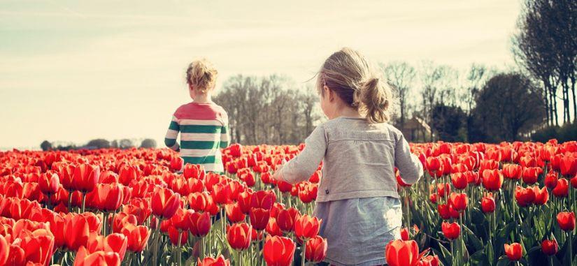 Gėlių paradas Olandijoje ir gražiausi Belgijos miestai