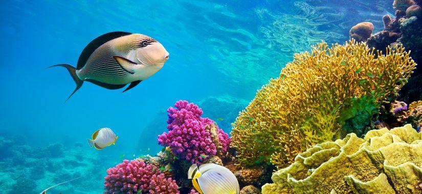 Marsa Alamas - poilsio ir povandeninio pasaulio oazė