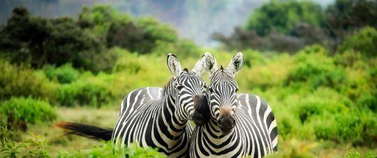 Naujieji metai Kenijoje gamtos ir gyvūnijos mylėtojams!