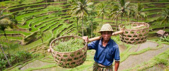 Nepamirštamos atostogos ramybės bei egzotikos oazėje - Balio saloje! Net 14 naktų 5 skirtinguose salos kurortuose!