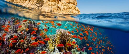 Planuok atostogas iš anksto! Puikūs pasiūlymai į Šarm el Šeichą! 2021 metų žiemos sezonas