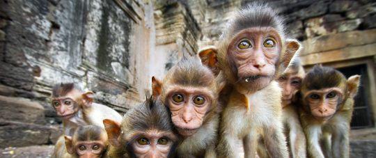 Puiki dienos išvyka visai šeimai - Šokolado pramoga su kelione į Rygos zoologijos sodą
