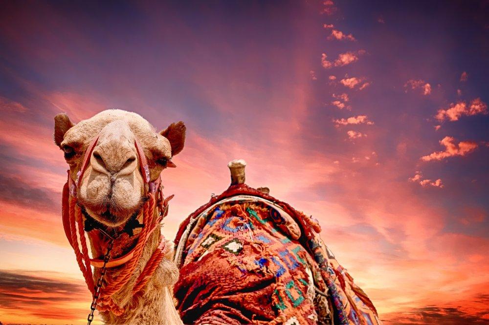 Užsitikrinkite žiemos atostogas Egipte palankia kaina!