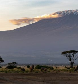 Žiemos atostogos egzotiškoje Kenijoje