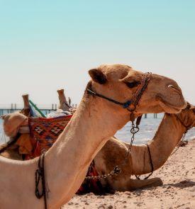 Žiemos atostogos Šarm El Šeiche